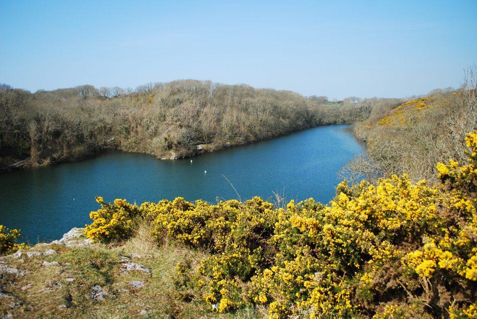Pembrokeshire Bosherston Lily Ponds