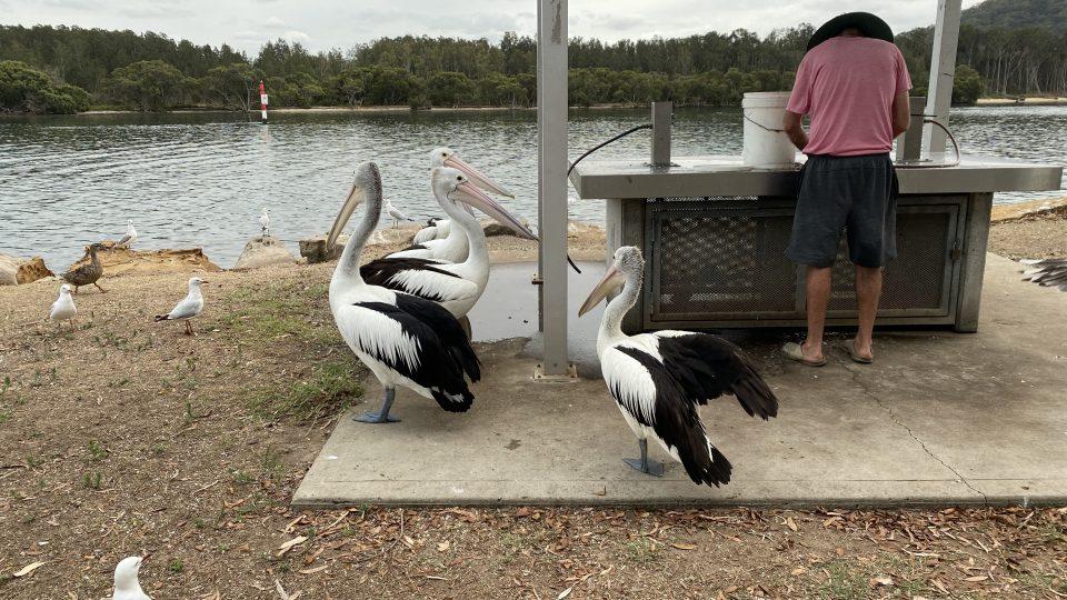 Pelican Island, Lions Park, Woy Woy, NSW